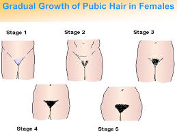 pictures of thick pubic hair puberty time of many changes ppt video online download