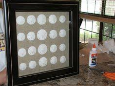 Where To Buy Sand Dollars Supplies Needed For Hardening Sand Dollars Rock And Shells