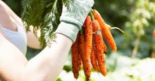 carrot ring swedish woman finds 16 year missing wedding ring wrapped around