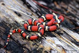 types of snakes pictures dowload