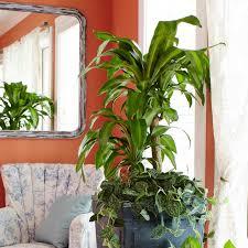 good houseplants for low light lovely types of large house plants 10 best low light houseplants