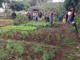 we preview evan ryan u0027s vegetable garden design and care workshop