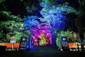 Colored Landscape Lighting A Japanese Forest Is Bathed In A Rainbow Of Colored Light