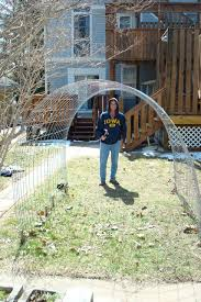 Trellis Arches Garden A Simple Trellis Out Of 15 U0027 X 4 U0027 Steel Grid Fencing 35 He Used