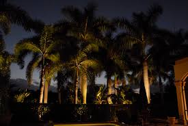 palm tree lighting expert outdoor lighting advice