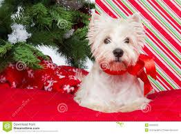 westie new year tree stock image image of celebration