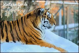 visite du zoo de granby sous la neige le blog de cindy et