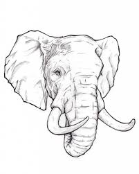 best sketches for beginner how to draw an elephant head stepstep