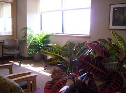 Livingroom Gg Living Foliage And Containers Guaranteed Green