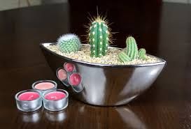 trio of cacti in indoor planter with mirror finish plant gift