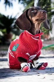 536 best knitting dog jerseys images on pinterest animals dog