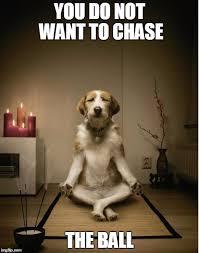 Do Not Want Meme - dog meditation funny imgflip