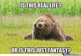 Meme Bear - new meme thinking bear by orbistruct meme center
