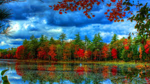 forest colourful trees lake blue sky nature red forests colours