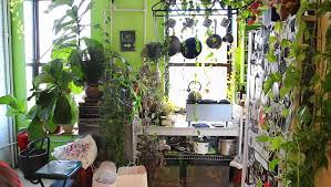 Summer Garden Apartments - brooklyn apartment transformed into greenhouse filled with over