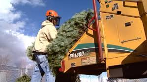 several communities begin their christmas tree recycling programs