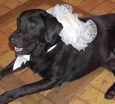 asian dog ring holder images Ring bearer pillows dog ring pillows wedding ring bear pillows jpg