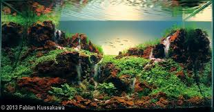 Aga Aquascape First Place Winner 2014 Aga Aquascaping Contest Entry 35