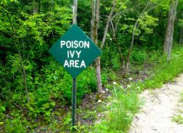 native plants wisconsin 5 poisonous plants to avoid in wisconsin wiscontext