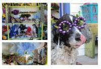 mardi gras gear mardi gras gear at gallery by the sea tybee island