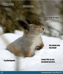 Dramatic Squirrel Meme - dramatic squirrel and photogenic he has such good quality s by