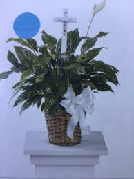 Peace Lily Plant Peace Lily Plant Plant In Basket With Ribbon And A Cross In