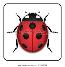 ladybug stock images royalty free images vectors