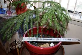 liza u0027s plants good to grow page 21