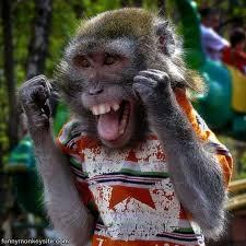 Baby Monkey Meme - happy baby monkey