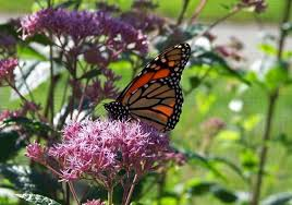 butterfly and flower images free stock photos 11 720 free