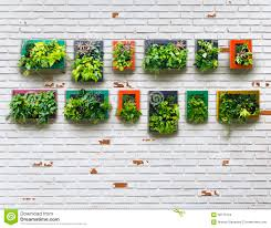 Vertical Garden Walls by Aged Brickwall And Vertical Garden Stock Photo Image 58175434