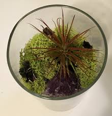 show your makers kit crystal sand art terrarium u2014 my subscription