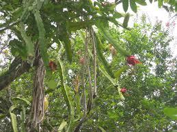 daleys fruit tree blog 2007