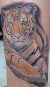 realy beautiful tiger