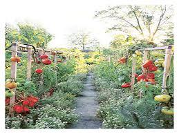 vegetable garden ideas and designslow maintenance gardening i on