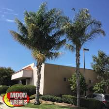 moon valley nurseries services save a palm