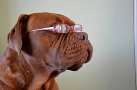 Causes Of Sudden Blindness In Dogs How To Tell If Your Dog Is Losing His Sight Petslady Com