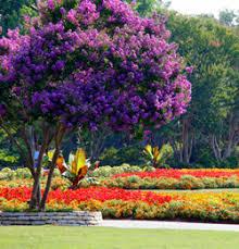 Dallas Arboretum And Botanical Garden Dallas Arboretum Botanical Garden Dallas Parks Tx Official