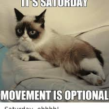 Funny Animal Memes Tumblr - saturday memes animals king tumblr