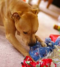 gift ideas for a pampered pet this holiday season earthbath