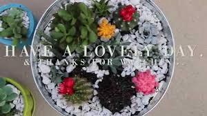 diy cacti u0026 succulent garden meg u0026 lex co youtube