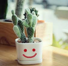 succulent facts cactus plant facts that are simply quite fascinating