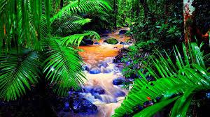 tropical jungle wallpapers 49 wallpapers u2013 adorable wallpapers