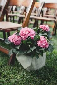 Potted Plants Wedding Centerpieces by 152 Best Potted Flower Wedding Images On Pinterest Flowers