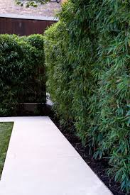 modern gardens small best privacy plants ideas on pinterest