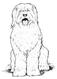 realistic dog coloring pages chuckbutt