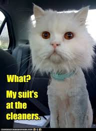 Cat In Suit Meme - lolcats shaved lol at funny cat memes funny cat pictures with