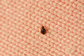 What Causes Bed Bugs To Come Out Where Do Bedbugs Come From How To Get Rid Of Bedbugs