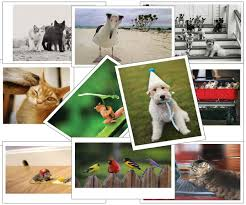 dog christmas cards pack best images collections hd for gadget