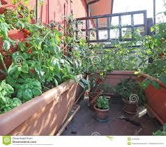 Urban Veggie Garden - urban vegetable garden with large pots on the terrace stock photo